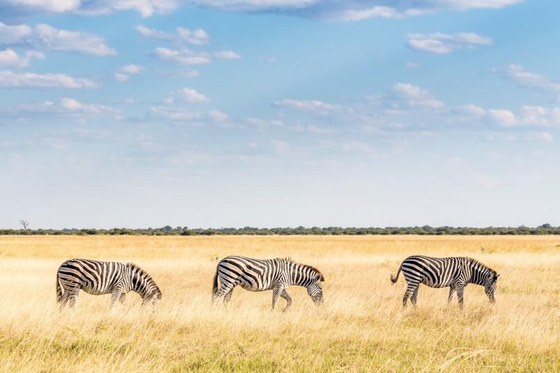 Faire un safari en Afrique